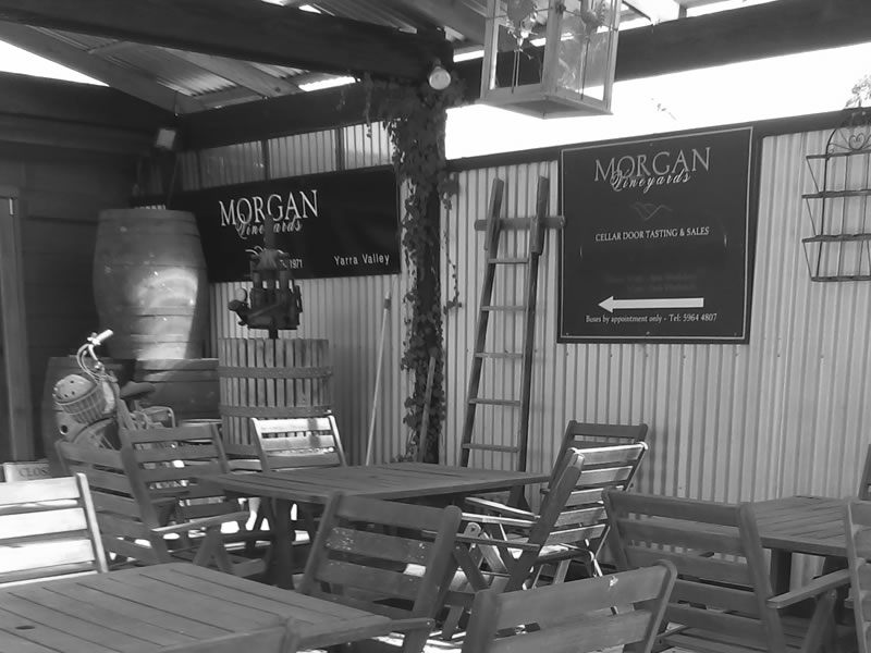 Cellar-door & Cellar Door - Morgan Vineyards